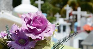 Rosa em cemitério - Certidão de Óbito
